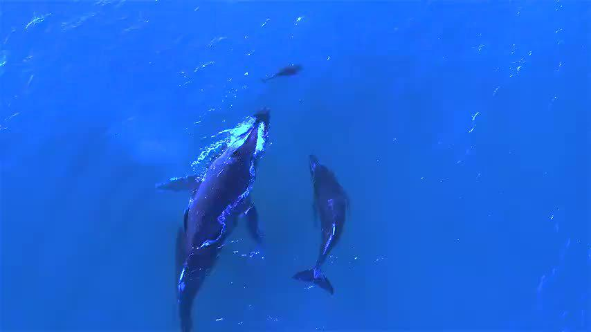 带娃的鲸鱼妈和海豚妈相遇,像是两个宝妈在分享育儿经验…………