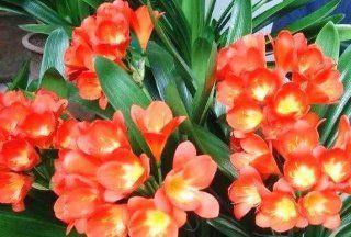 养花浇点神仙水,像打鸡血般新叶嗖嗖长,花苞蹭蹭长!