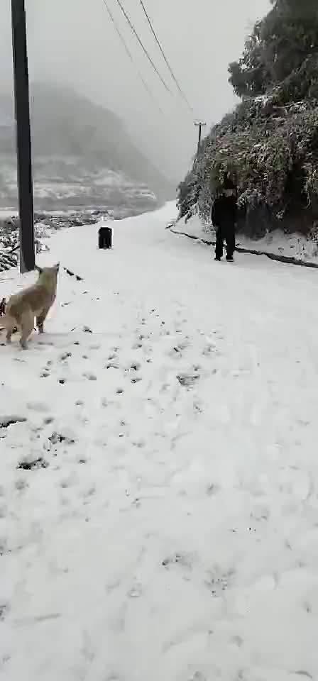 狗子:卧槽来真的!!