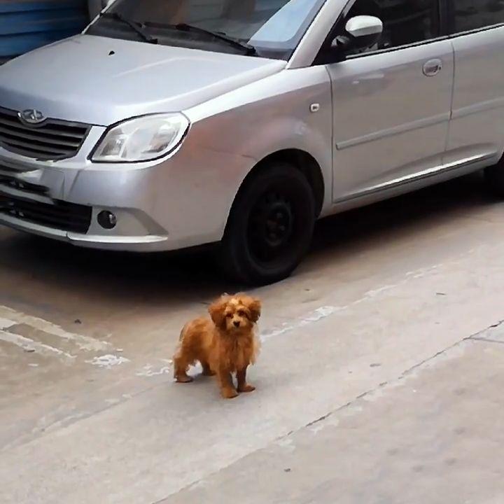 为了有个家,流浪狗极力讨好人类,被宠物狗驱赶也不愿离开