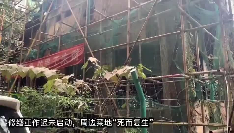 """蜀都中学旧址修缮久未启动,周边""""复生""""菜地再度将其包围"""