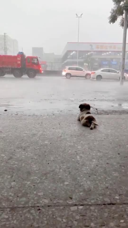 惬意狗生,看着雨,想着你~