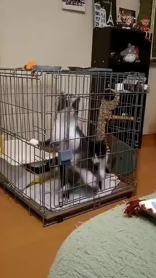 猫咪永动机,无敌风火轮,量子纠缠,太极...