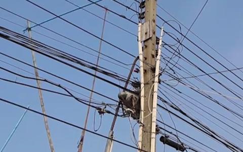 蟒蛇在电线杆上面盘踞,网友们调侃道:白娘子这是在渡劫啊!