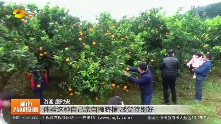 第六届脐橙文化旅游节在新宁开幕