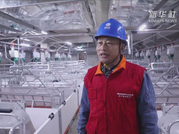 """吉林辽源:供电服务养殖业 """"电""""亮乡村振兴路"""