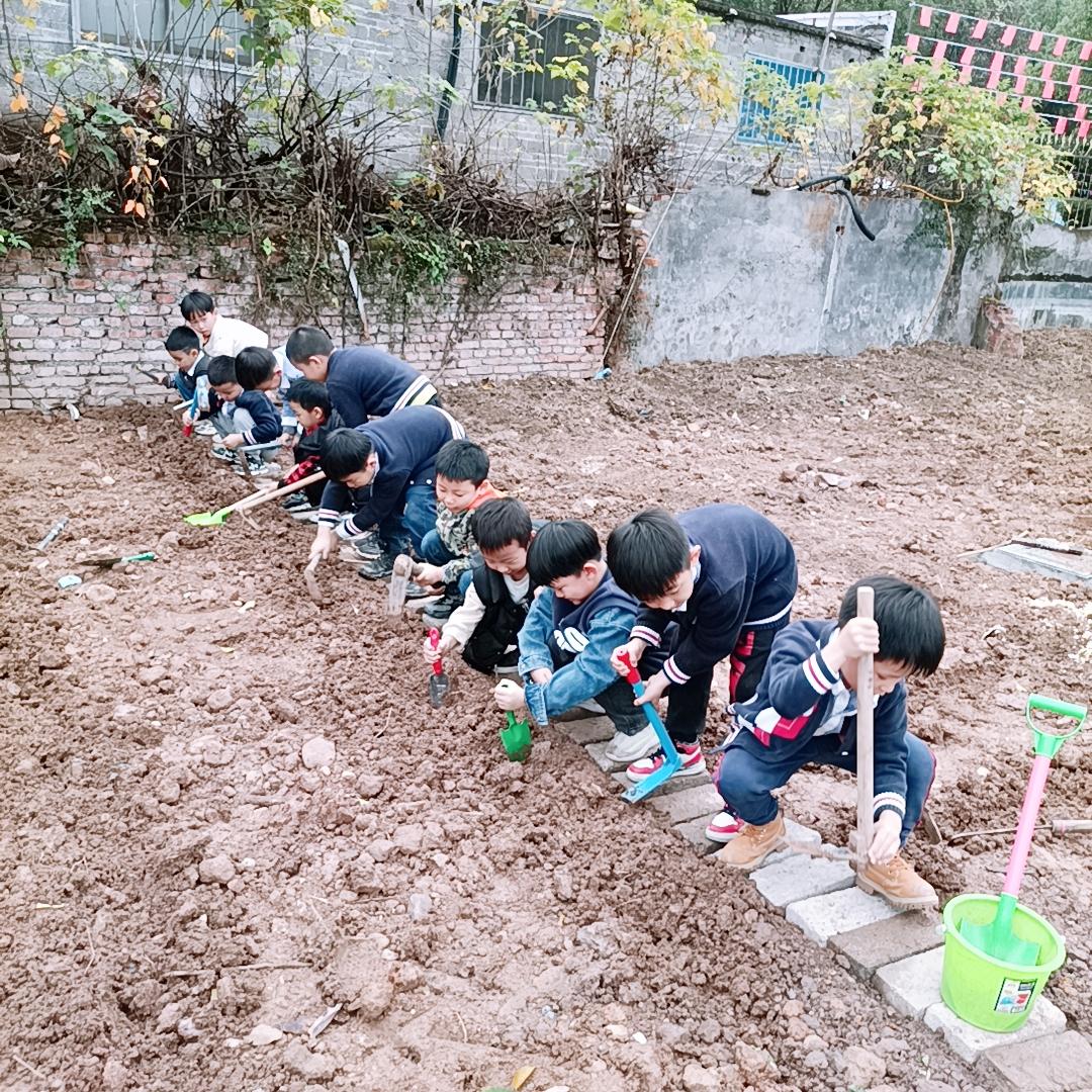 东阳市贝贝佳音幼儿园:我的菜园我做主