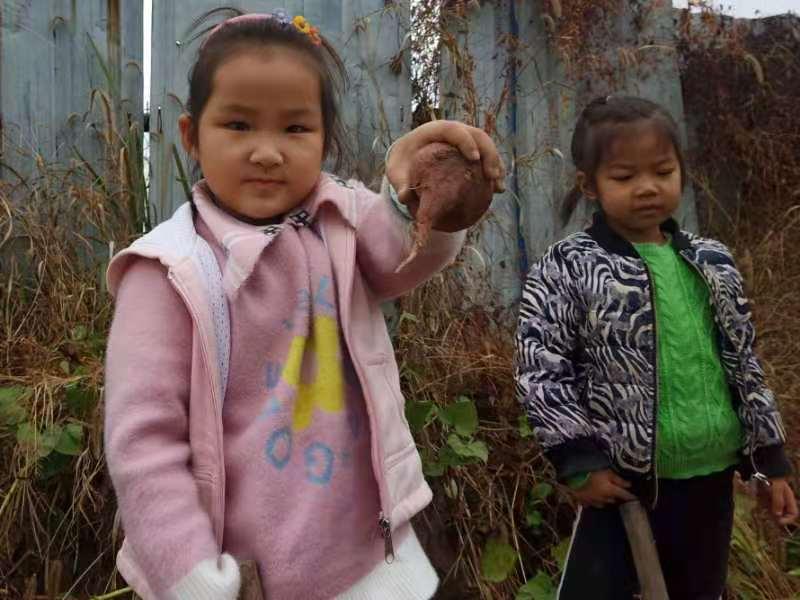 东阳市歌山中心幼儿园甽干教学点:走进种植区 喜获大红薯
