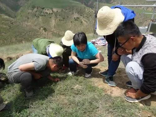 """在黄土高原,科学家用十余年找到了防风固沙的""""功臣"""""""