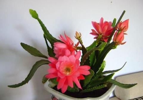 1种花,颜值不输荷花,比绿萝还好养,花型硕大,养一盆就等爆盆