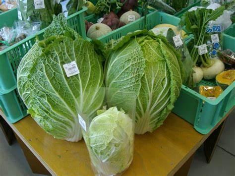 3米高的辣椒、160斤的西瓜、1.5米高的冬瓜…蔬菜成精了