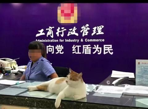 最有爱工商所:流浪猫趴柜台,逮老鼠、化解纠纷,还进了宣传C位