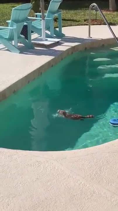 防疫期间,干脆面闯进游泳池里享受起来!