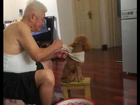 网友送给爷爷一只泰迪,嘴上说不要,过段时间看见他在给狗搓澡!