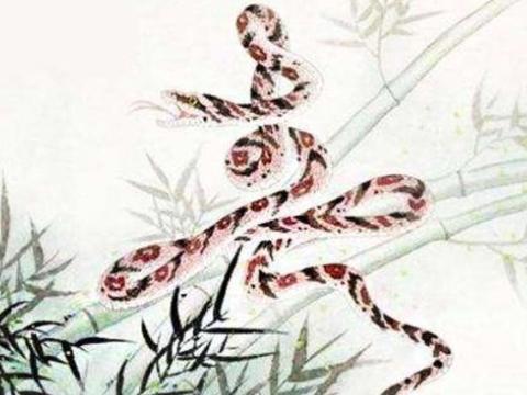 生肖蛇:11月30日会有1个贵人来圆你10年心愿,看看他是谁吧!