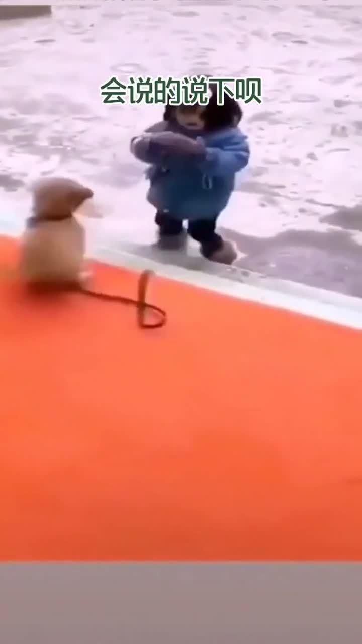 小狗好心爱