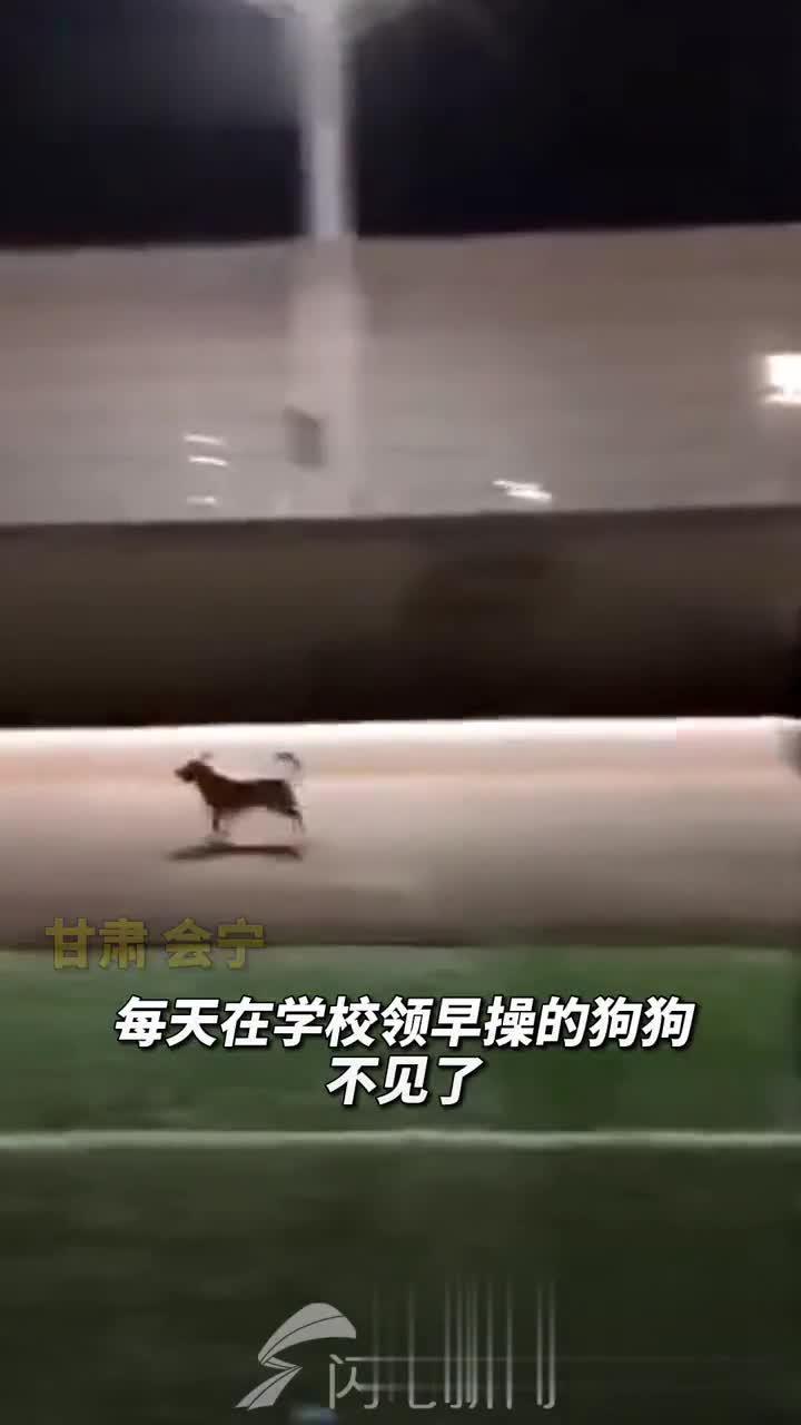 甘肃会宁县第五中学,一只狗狗每天给学生们领早操…………
