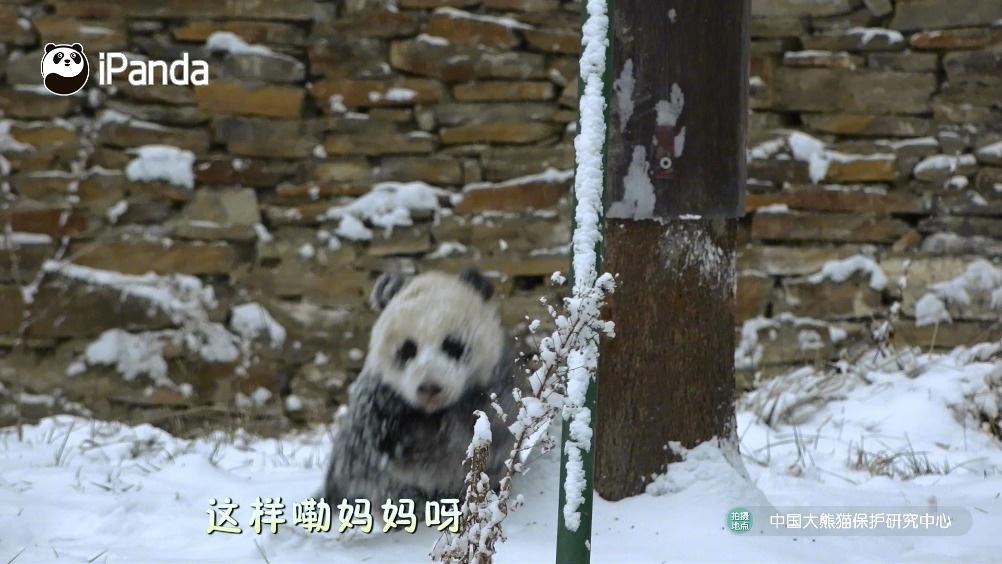 熊猫妈妈的扫雪小工具