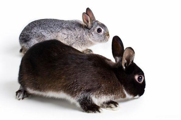 生肖兔的人,你是白天出生还是晚上出生?出生时间决定了你的命运