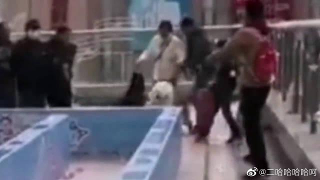 当哈士奇参加狗狗运动会时,二哈:无心参加比赛,只想谈个恋爱!