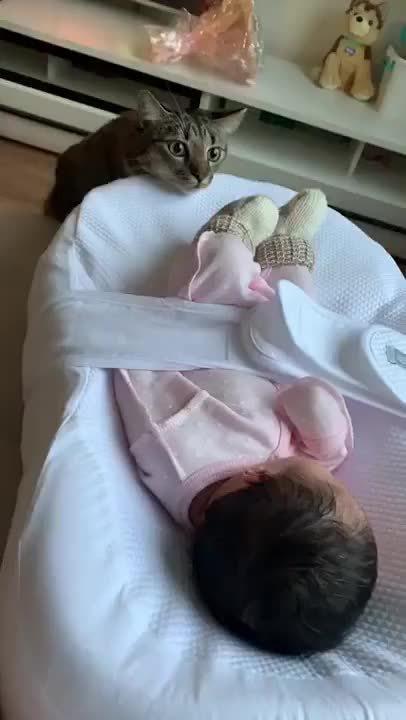 喵星人第一次见到人类的小宝宝…………