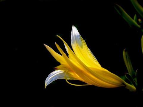 下周之内,缘分桃花跨过风雨,爱情来临浪漫温馨的4大生肖!