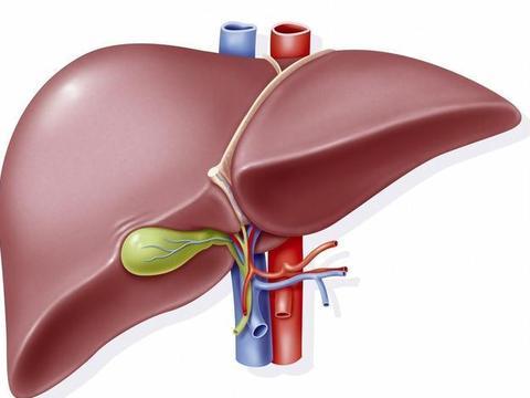 肝脏健康出现问题,饮食上要注意哪些方面?一文为你全总结