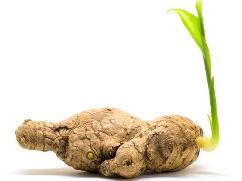 长芽的土豆、大蒜、生姜、红薯,哪个能吃?为了健康,多了解吧