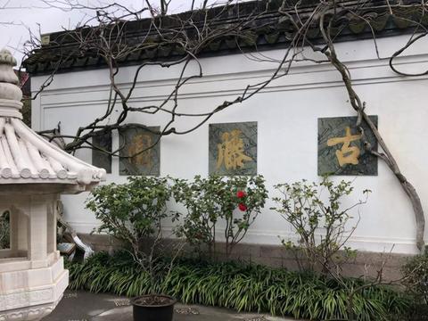 上海一特殊园林走红,因一条紫藤而修建,门票免费却鲜为人知