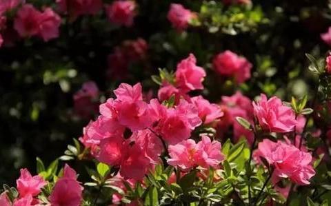春天养花,建议别选这5种,比杜鹃还难过夏,白费力