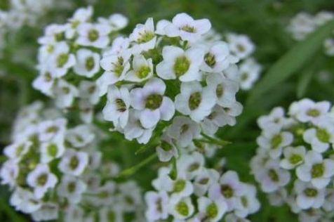 新手喜欢养护花卉,就养沾土就能活,开花就爆盆的花卉,美丽!