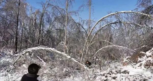 船营区林业畜牧业管理局开展暴雪冰冻灾害核灾自救工作