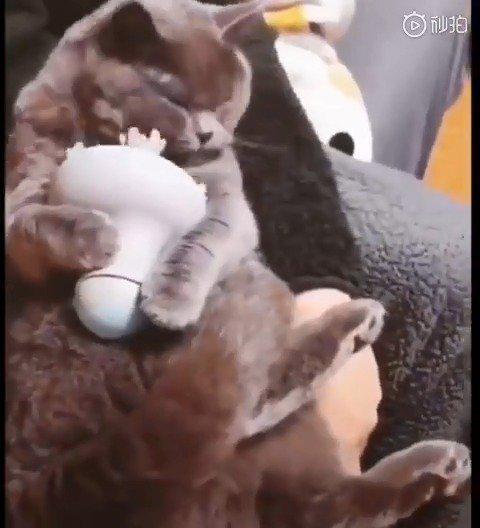 你已是一只成熟的小猫咪了,要学会本身给本身推拿了!