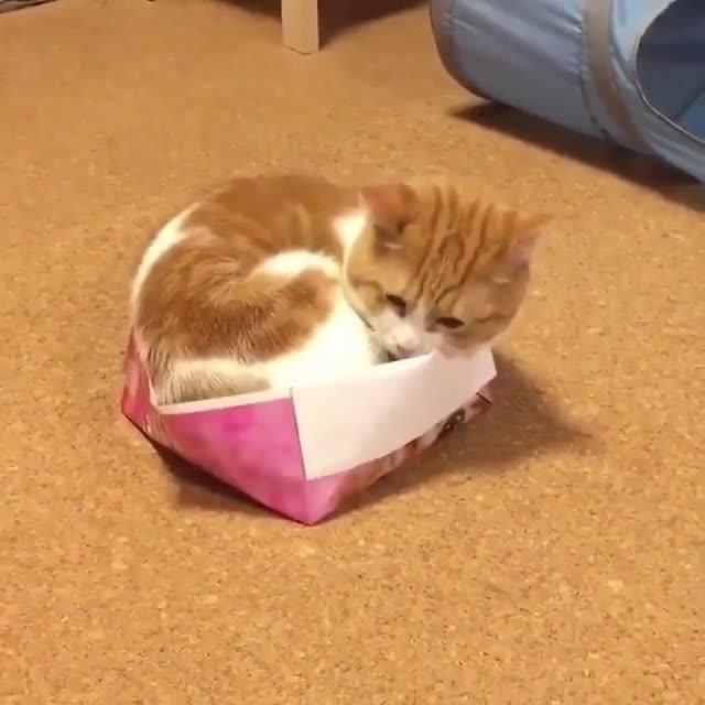 猫咪这么小的纸盒都征服了,果然是液体