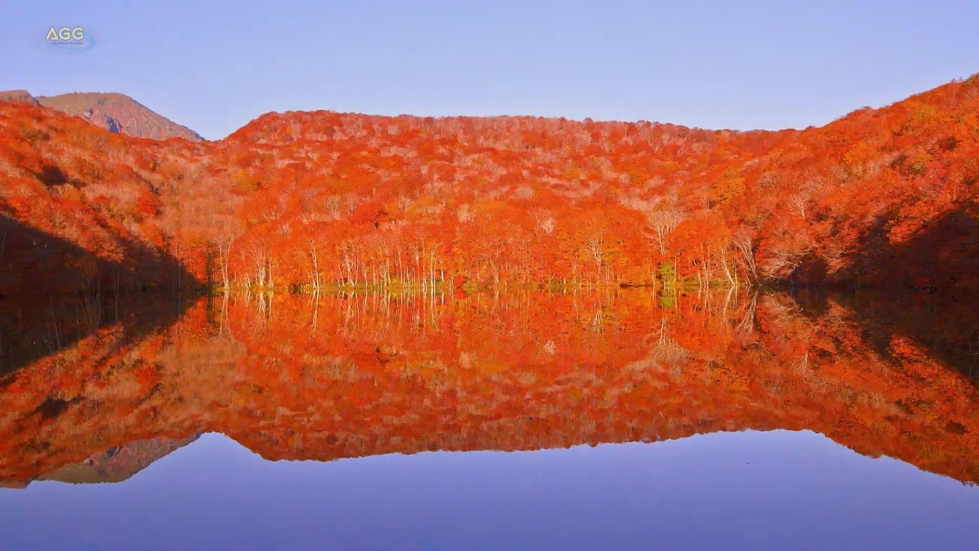 青森县茑沼的红叶!太好看了 视频来源