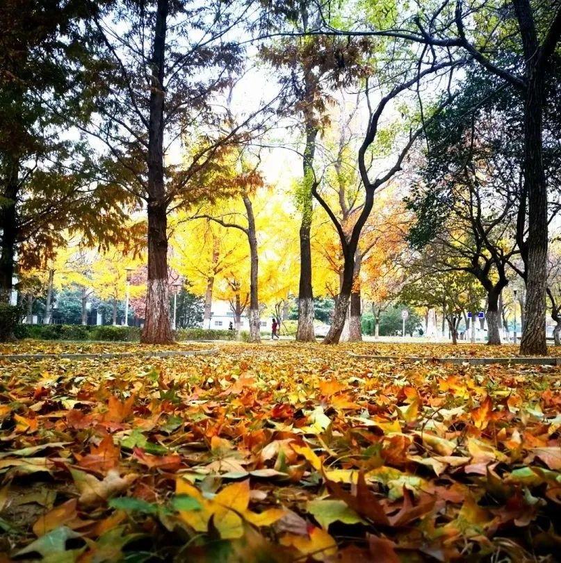 山东最美大学校园|冬日一场雨,山农一幅画!