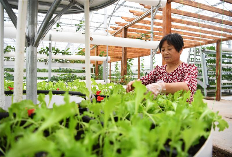 河北河间:订单农业助农增收