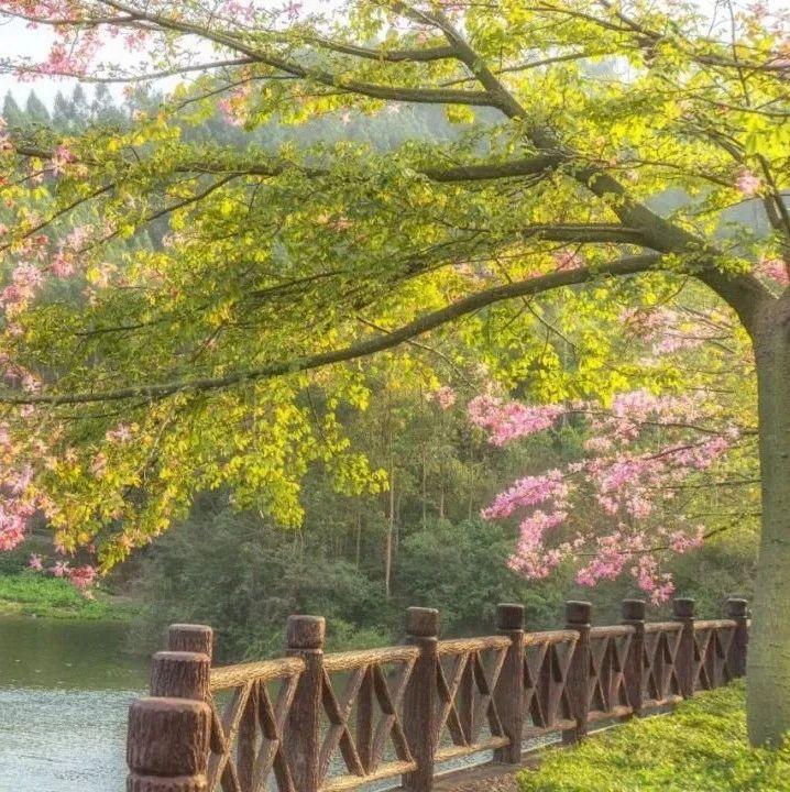风景如画!冬天,我在南方玉林的花海绿荫里美艳动人