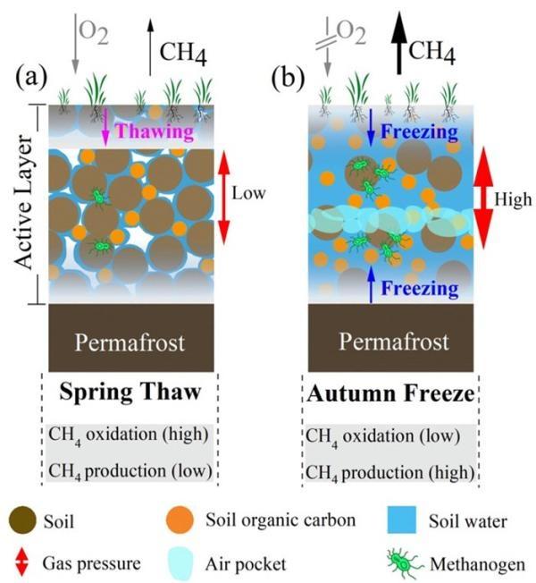 大气物理所揭示北极苔原春秋过渡季冻融过程差异对甲烷排放的影响机制