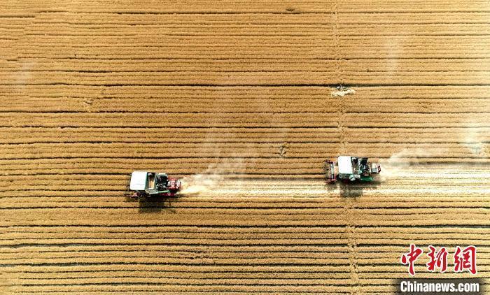 专家:中国粮食供应有保障 价格上涨难持续图片