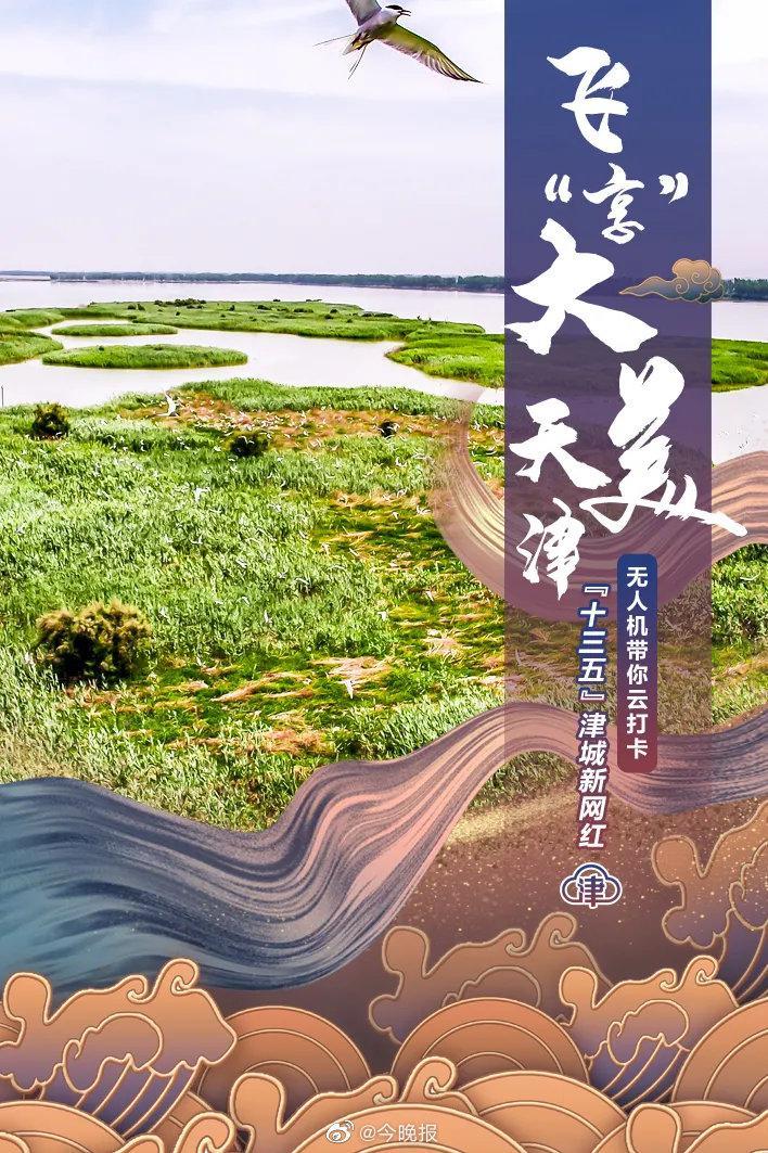 """飞""""享""""大美天津,候鸟天堂——七里海!(第六期)"""