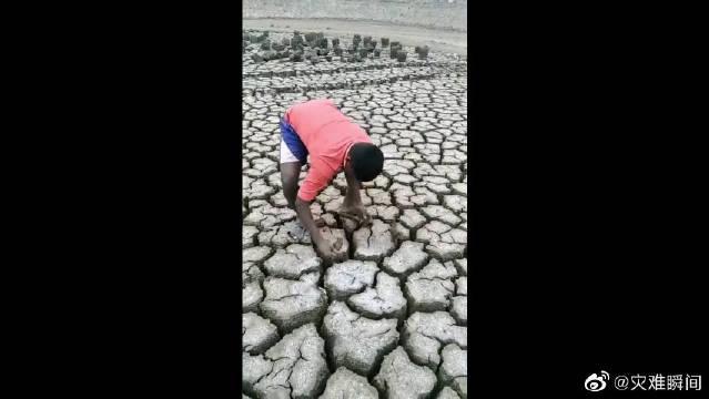非洲大干旱,地里都成这样了,不知道怎么熬过这一年!