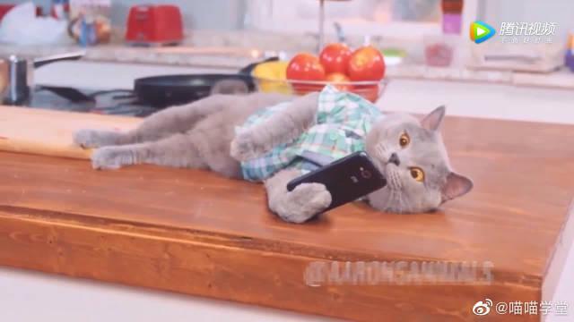 猫星人在家玩手机,聊不到妹子就砸手机