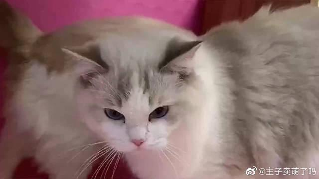 女主人养了一屋子猫咪,它们一个比一个可爱,太让人喜欢了