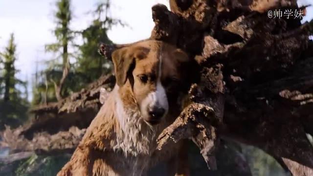 正能量影视剪辑 厉害了大狗巴克