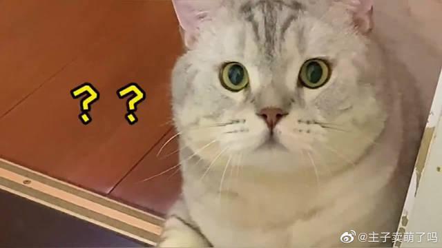 当女主人偷吃猫咪的猫粮,猫咪会有什么反应,它感觉不可思议!