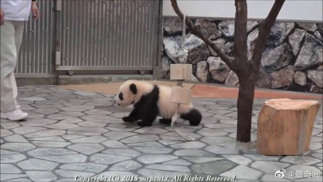熊猫宝宝就像个糯米团,一举一动可爱到犯规!