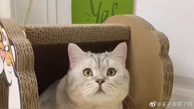 有些小猫咪洗澡前和洗澡后完全是两副面孔……