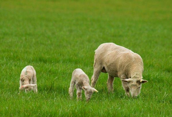 生肖羊12月1号大喜临头,躲不开的喜,属羊人花一分钟看看什么喜