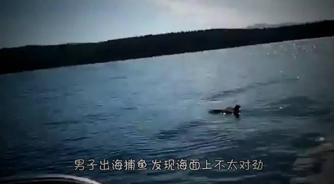 渔民出海捕鱼,突然发现海面上不太对,看清后果断把它捞起来